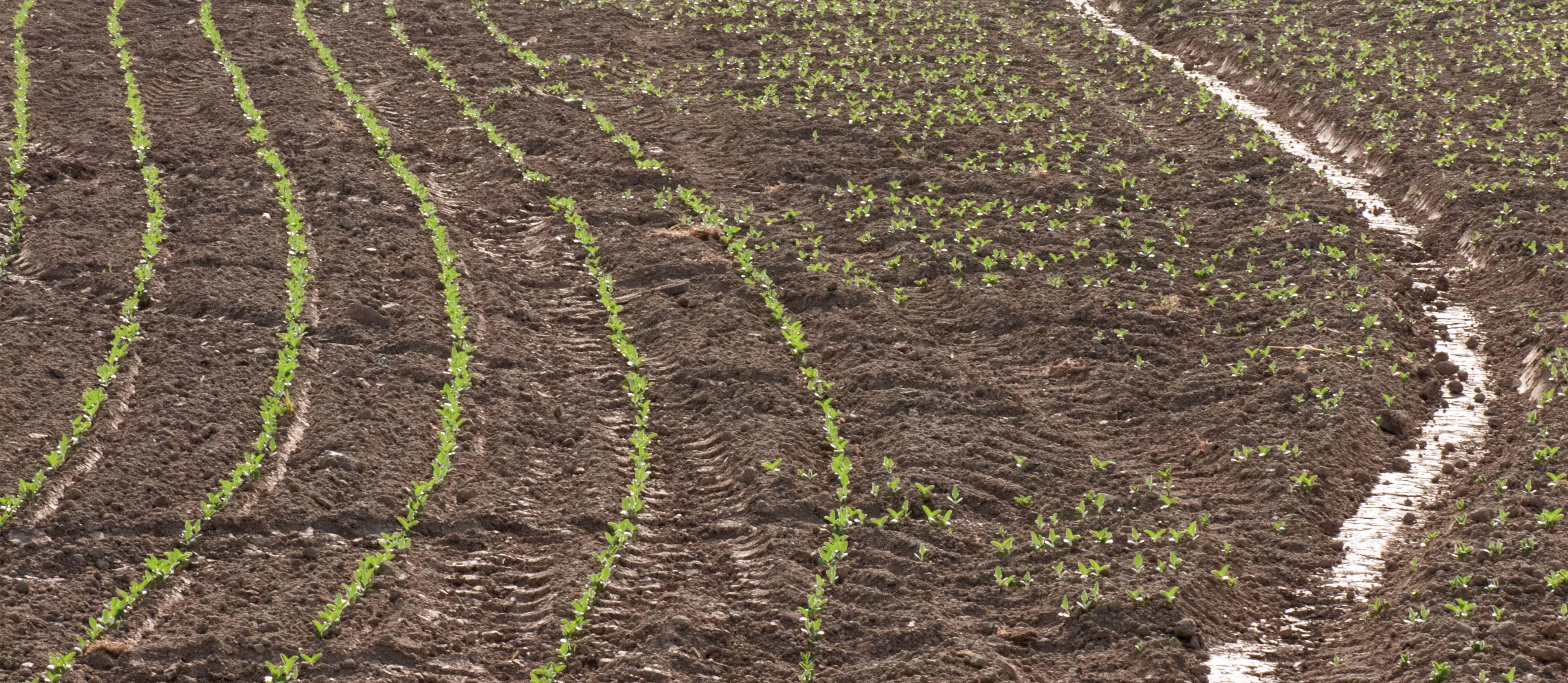 mais-piantato-web